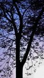 Konturträd i morgonen av staden Arkivfoto