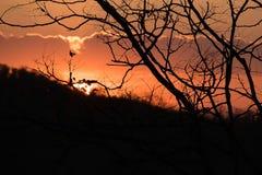 Konturträd mot med härlig orange himmel Solnedgång i bakgrund Abstrakt orange sky Dramatisk guld- himmel på solnedgången b Arkivfoto