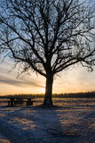 Konturträd och bänk Arkivfoto