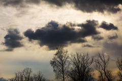 Konturträdfilialer med himmel Solnedgång Bakgrund för design Blasten av träd dramatiska himmel och moln Arkivfoto