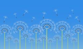 Konturu dandelion kwitnie aplikację Obraz Royalty Free