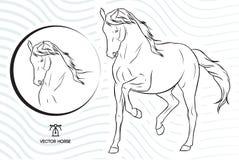 Konturvektorhästen som går show - plus en hästframsida inom en cirkel - med en vektor vinkar bakgrund royaltyfri illustrationer
