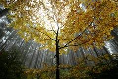Konung av skogen Royaltyfria Foton