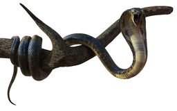 Konung Cobra Snake med den Cliping banan stock illustrationer