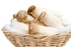 Konung Oyster Mushroom som isoleras på vit Arkivbilder