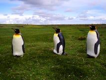 Konung Penguins Arkivfoto