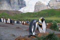 Konung Penguins på guld- hamn Royaltyfri Fotografi