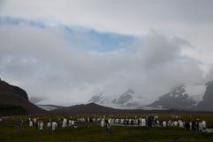 Konung Penguins på Salisbury slättar Arkivbild
