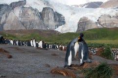 Konung Penguins på guld- hamn Royaltyfri Bild