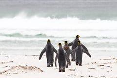 Konungen Penguins går för att fiska Royaltyfria Bilder
