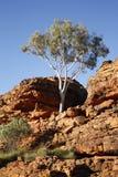Konungkanjon NT Australien Arkivbild
