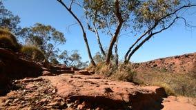 Konungkanjonkanten g?r landskap Watarrka nationalpark runt om Australien campfireliten vik g?rar till kung kamratskap det gjorda  stock video