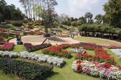 Konungträdgård i thailändskt Arkivbilder