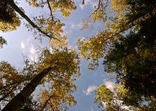Konvergenzbäume zu den Himmeln Stockfotos