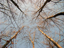 konvergerande trees Arkivfoton