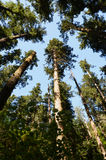 Konvergierende Bäume Lizenzfreie Stockbilder