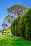 Konvergierende Hecken in einem Park des Landhauses Cimbrone in Ravello auf dem Amalfi fahren das Konzept von Tourismus und von Ku Lizenzfreie Stockfotos