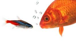 konversation fiskar holdingen Arkivfoto