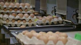 Konwejer z kurczaków jajkami zbiory wideo