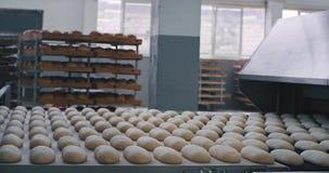 Konwejeru pasek gotowy iść na automatyzującej pasowej linii w nowożytnej piekarnia przemysłu fabryce surowy chleb zbiory wideo