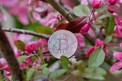 Konzept Bitcoin-Münze im Freien Stockfotos