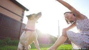 Konzept der Freundschaft und der Haustiere Gl?ckliche junge Frau und Hund, die Spa? am Gras hat stock footage
