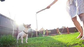 Konzept der Freundschaft und der Haustiere Gl?ckliche junge Frau und Hund, die Spa? am Gras hat stock video