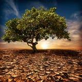 Konzept der globalen Erwärmung. Einsamer grüner Baum an der Wüste stockfotografie