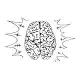Konzept der Kreativität mit menschlichem Gehirn des Vektors Lizenzfreie Stockfotografie
