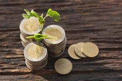 Konzept des Geldbaums wachsend vom Geld Finanziell und Einsparung lizenzfreie stockfotos