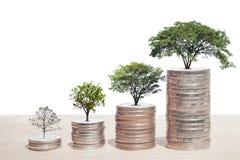 Konzept des Geldbaums wachsend von den Münzen Lizenzfreies Stockfoto