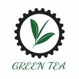 Konzept des grünen Tees durch Farben des Gebrauches drei und Hintergrundweiß Stockfotografie