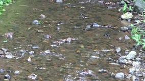 Konzept des sauberen und Süßwassers stock video