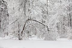 Konzept des schlechten Wetters Schneefälle im Park, Winterwetterszene, Schnee umfassten Baumlandschaft Stockfotografie