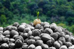 Konzept differenzieren zwischen und anderen Jungpflanze stockfoto