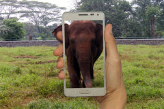 Konzept für Tourismus im Zoo, Afrikaner, asiatisches Land lizenzfreie stockfotografie