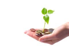 Konzept für Wachstum des Geschäfts Stockbild