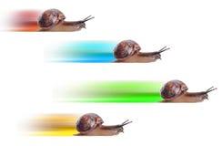 Konzept. schnelle Schnecke mit farbigem Schattenbild. Stockfotos