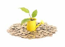 Konzept von Einsparungen und von Geldbaum Lizenzfreie Stockfotografie