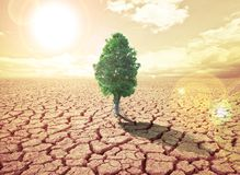 Konzeptbild der globalen Erwärmung Stockbilder