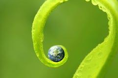 Konzeptfoto von Erde auf grüner Natur, Erdkarte mit Genehmigung Stockbild
