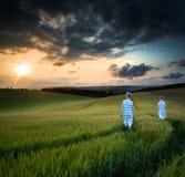 Konzeptlandschaftsjungen, die herein durch Feld bei Sonnenuntergang gehen Stockbilder