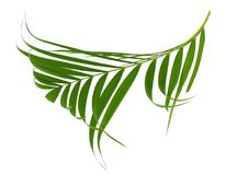 Konzeptsommer mit grünem Palmblatt von tropischem Wedel mit Blumen Flora, Wald Stockbild