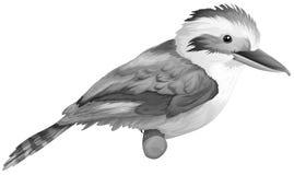 A kookaburra. Illustration of a kookaburra on a white background Stock Photo