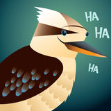 Kookaburra portrait Stock Images