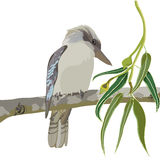 Kookaburra Vector Illustration Royalty Free Stock Photos