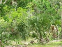 Kool Zeer belangrijk Florida Royalty-vrije Stock Afbeeldingen