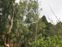 Koolau Mountains. View from the mountain forest on windward Oahu Stock Photography