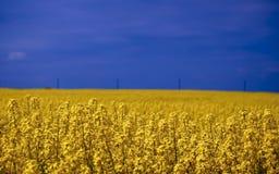 Koolzaad, Canola, Biodieselgewas Royalty-vrije Stock Foto
