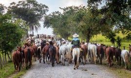 Koord van paarden op een kleine weg in Costa Rica royalty-vrije stock afbeelding